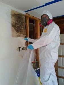 Technician Removing Mold From Wall